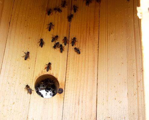 BeeHeroHive Innenansicht
