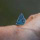 Schmetterling auf dem Arm